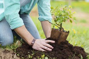 10-cosas-claves-que-debes-saber-sobre-plantar-un-árbol-frutalMainPhoto